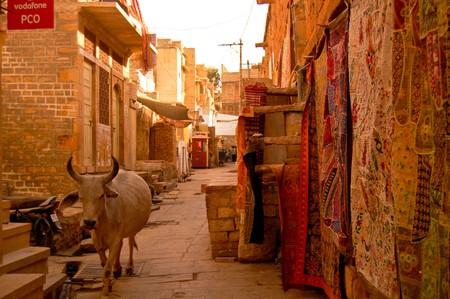 india cow: street in jaisalmir