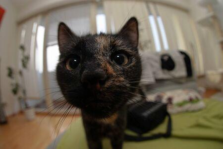 Fisheye cat Stock Photo