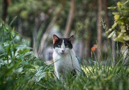 cat in gras