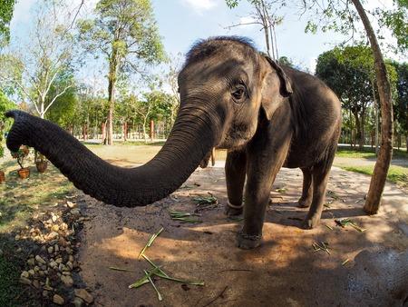Koh Chang Elephant groothoek Stockfoto