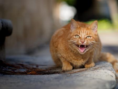 textured wall: street cat