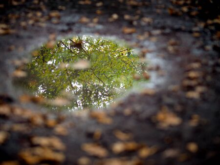 reflection of tree in puddle