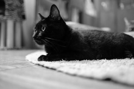Katze im Katzencafe Lizenzfreie Bilder