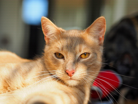 Portrait of ginger cat looking at camera