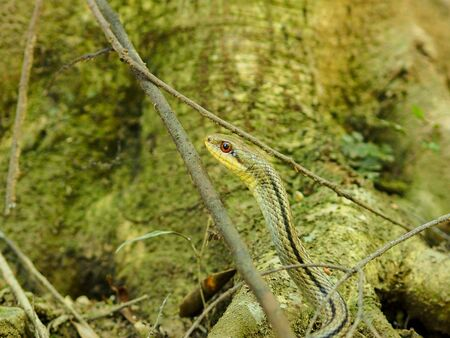 small green snake in Kyoto Stock Photo