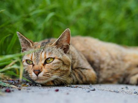 better: street cat in Kyoto Park