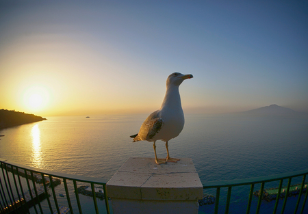 seagull at coast