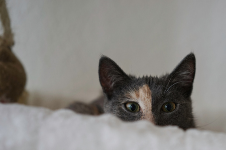 cat hiding behind blanket Stock Photo