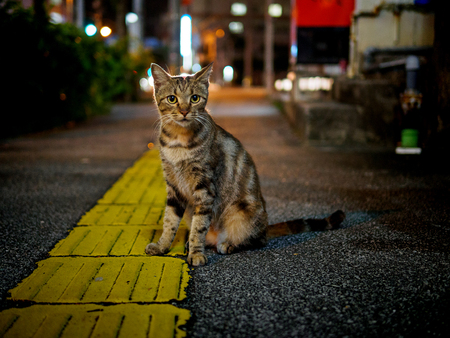 street cat at night