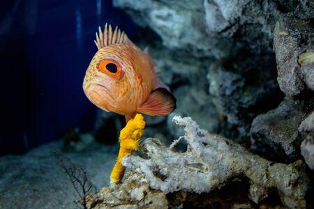 sad looking fish Stock Photo