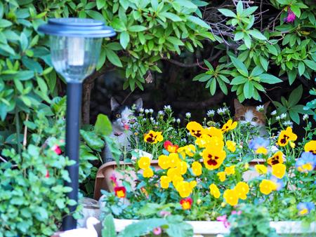 Kätzchen versteckt im Garten Lizenzfreie Bilder