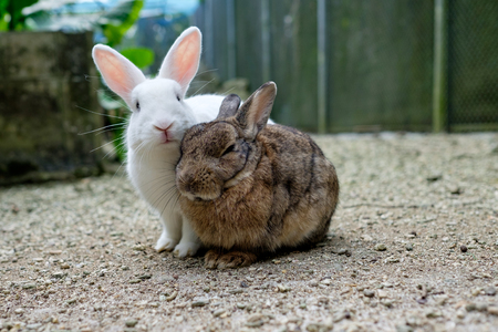 two cute rabbits on sand