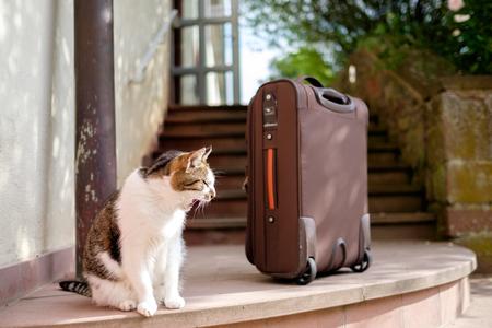 cat with suitcase Lizenzfreie Bilder