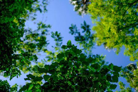 Bomen en lucht