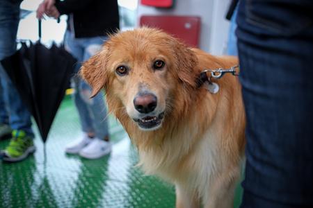 Netter Hund Blick in die Kamera Lizenzfreie Bilder