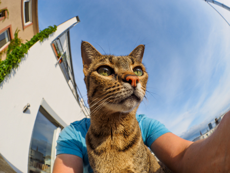 Fisehye selfie with Savannah cat