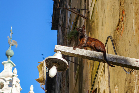 moggi: street cat