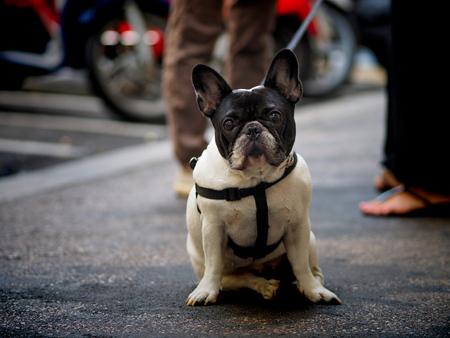 Porträt von Straßenhund