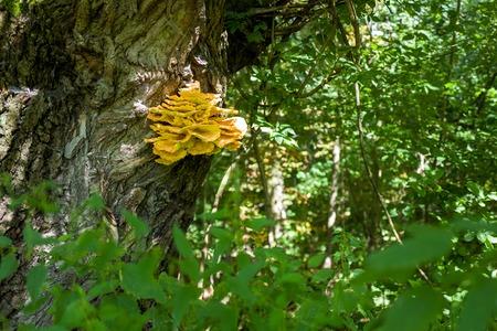 Mushroom in Frankfurt Niddapark
