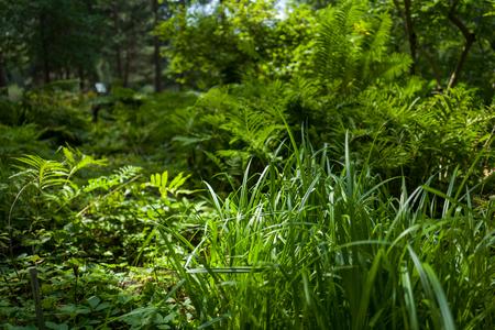 Grüne Blätter im Botanischen Garten Lizenzfreie Bilder