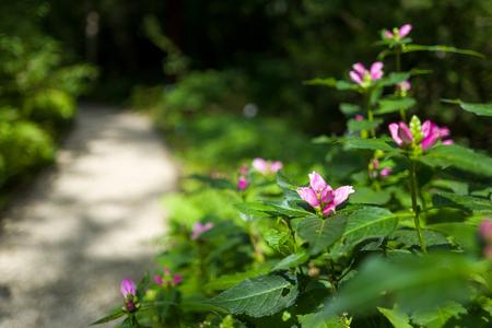 lila blumen im botanischen garten