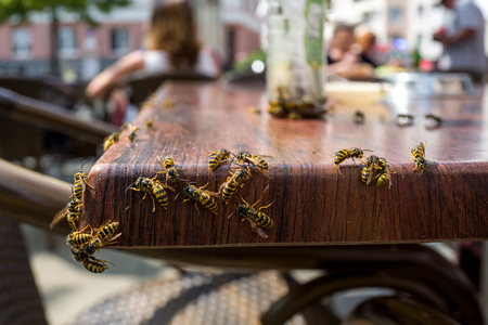 カフェでハチ 写真素材