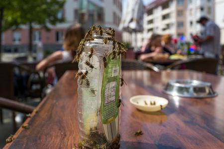 Wespen in einem Cafe Lizenzfreie Bilder