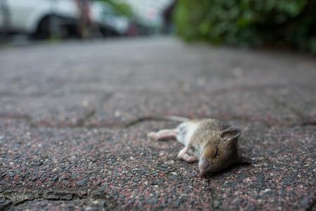 dead bird on boarrdwalk Lizenzfreie Bilder