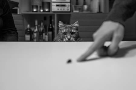 Cute cat at table