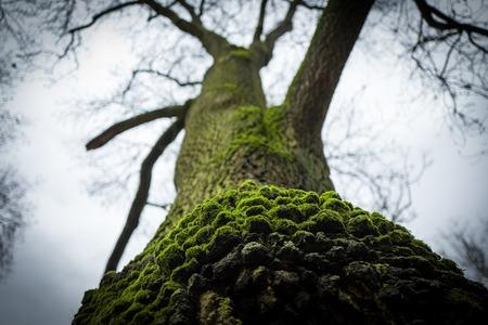 Green tree in Frankfurt Gruenburgpark Standard-Bild