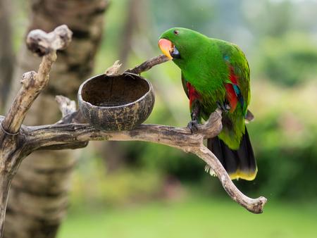 Een groene papegaai in Bali Zoo Stockfoto