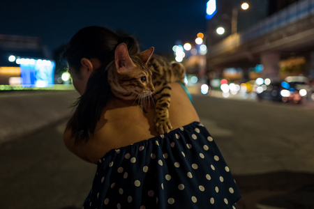 Bengal cat on the back of a girl in Taipei, Taiwan. Stock fotó