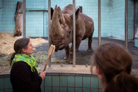 Frankfurt, Germany - February 14, 2019: Frankfurt Zoo staff cleans rhino