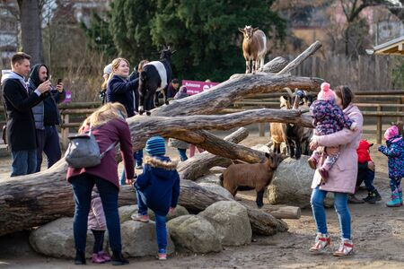 Frankfurt, Germany - February 14, 2019: People have fun with goats in pettingzoo in Frankfurt Zoo.