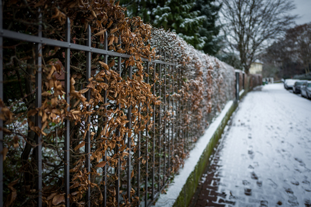 Snowy area in Frankfurt Bockenheim