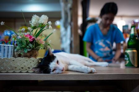 A street cat in Koh Lipe, Thailand. Фото со стока - 120511298