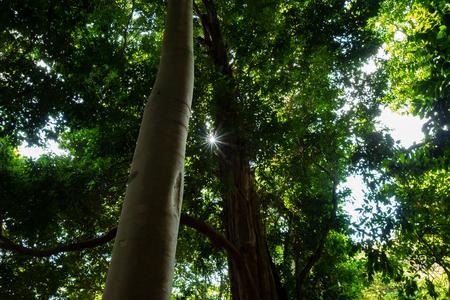 Ko Adang Island near Koh Lipe, Thailand. Фото со стока - 120511971