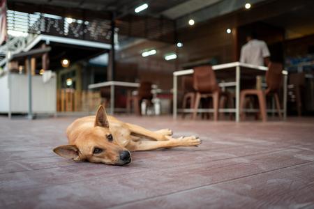 Street dog in Koh Lipe, Thailand.