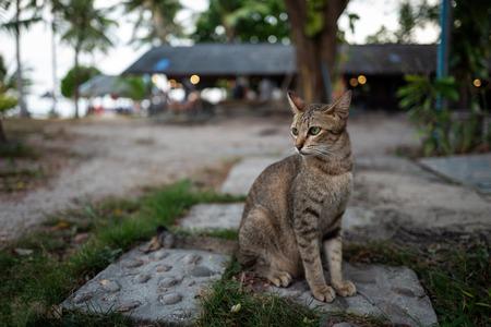 A street cat in Koh Lipe, Thailand. Фото со стока - 120512438