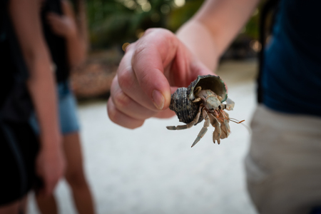 A hermitcrab on Koh Lipe in Thailand