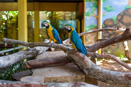 Parrot at Langkawi Wildlife Park Фото со стока