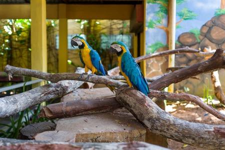 Parrot at Langkawi Wildlife Park Фото со стока - 120513113