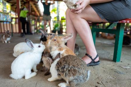 Girls feeds rabbits in zoo Фото со стока