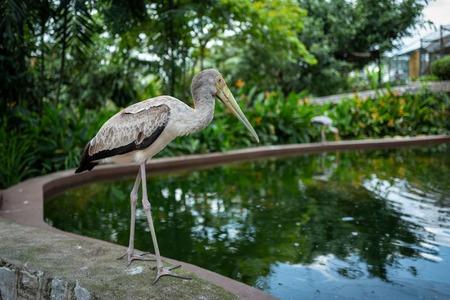 A bird at the Kuala Lumpur Birdpark