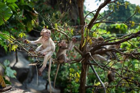 Monkey with baby at Batu Caves Kuala Lumpur
