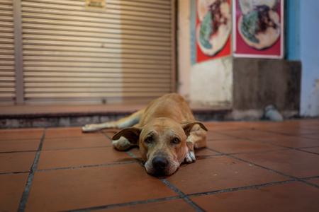 A street dog in Malacca, Malaysia. Фото со стока