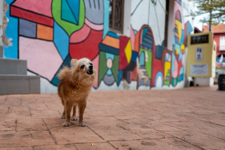 A dog in front a a colorful house in Malacca, Malaysia