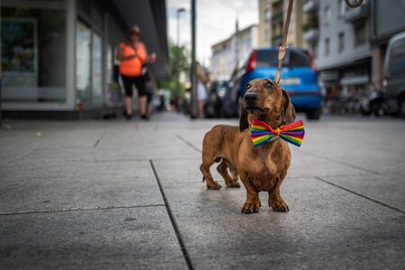 Frankfurt, Germany - July 20, 2019: A dog at the Christopher Street Day in Frankfurt. Editorial