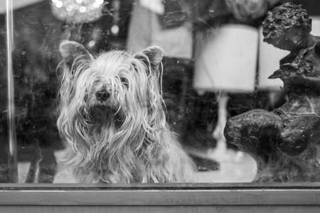 A small dog behind a window in a shop