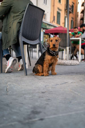 A cute dog on the streets of Pisa